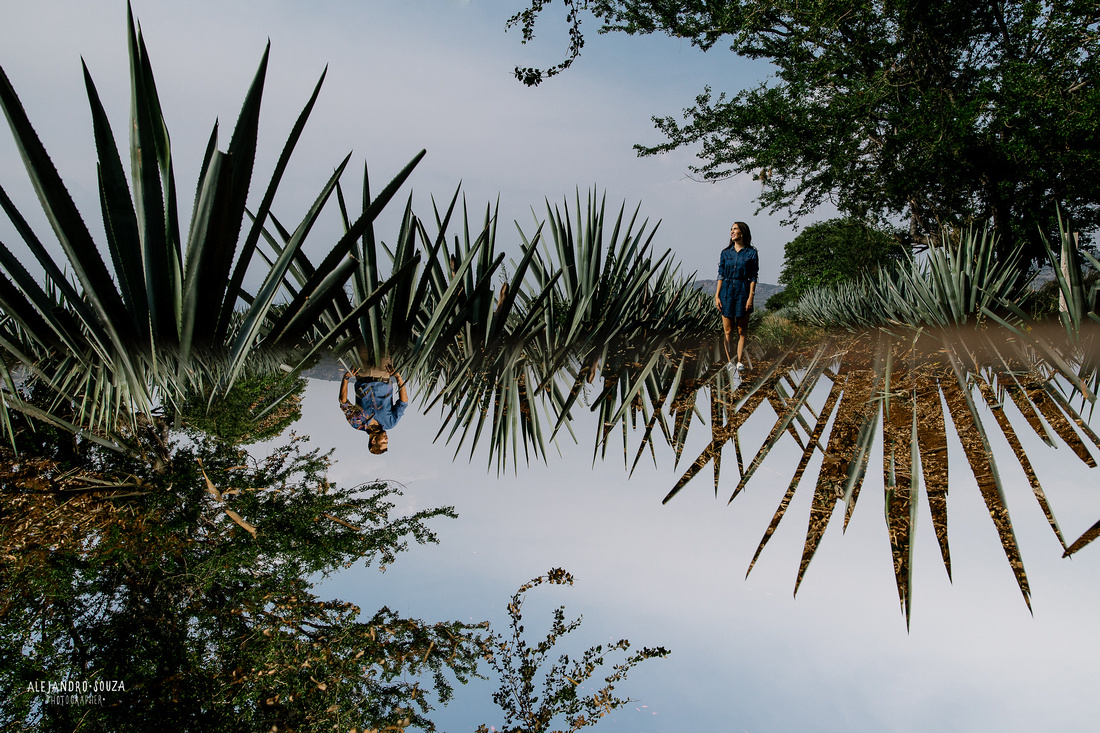 paisaje agavero